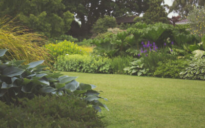 5 Lawn Care Secrets to Keep Your Yard Looking Good All Year