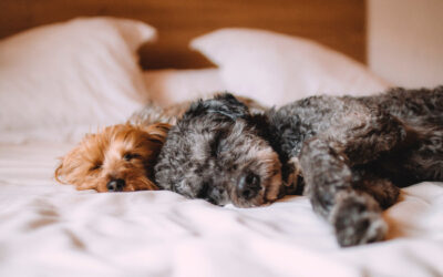Pet Stain Removal Tips Before Hiring Cleaning Services
